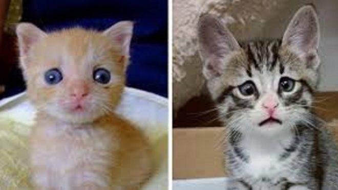 Obrázky sladké kočičky