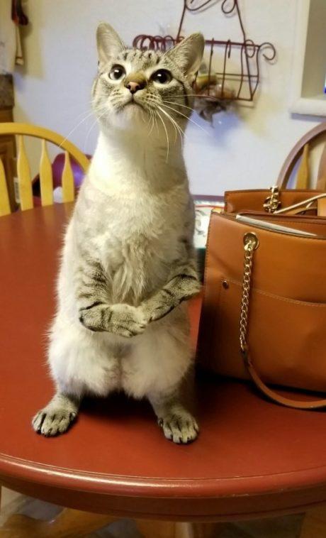 Kočka Juju