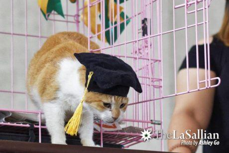 Kočka Archer promuje