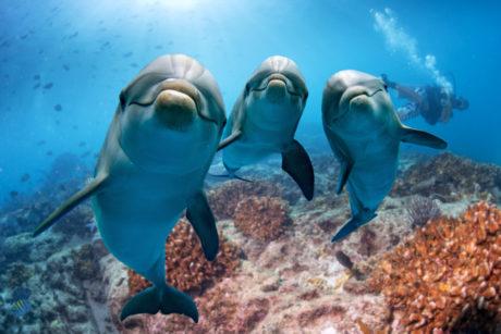 Delfíni koukající se do kamery