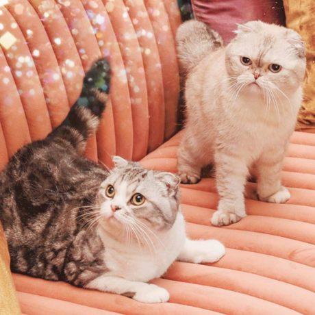 Kočky Taylor Swift