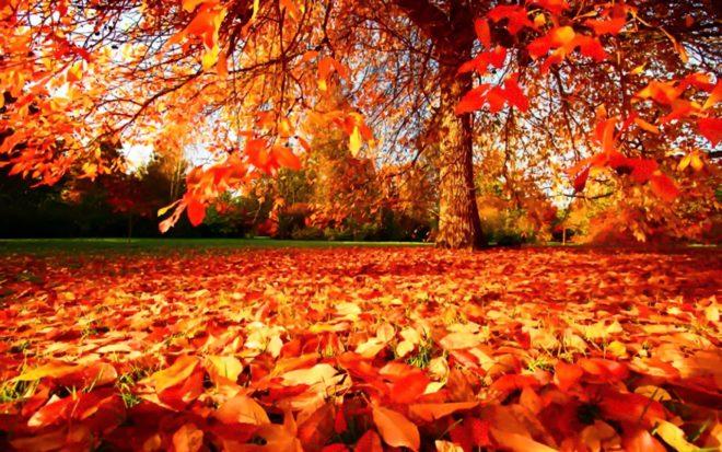 Instagramová výzva týdne: Ukaž barvy podzimu | EVROPA 2
