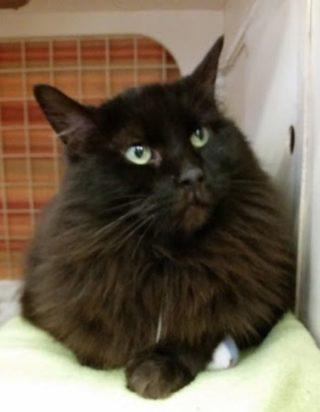 fotky černých žen kočička