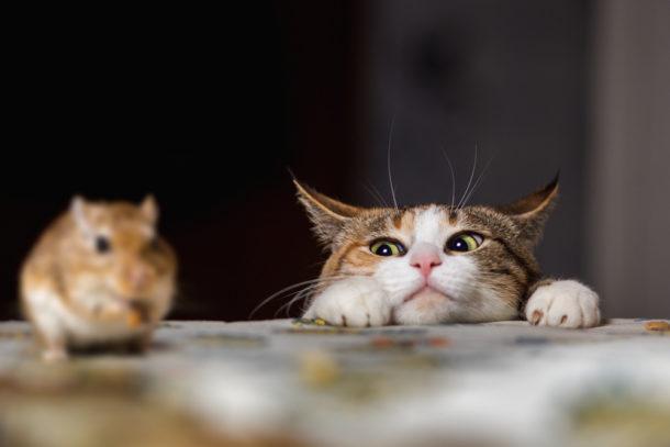 Chlupatý kočička sex vedios