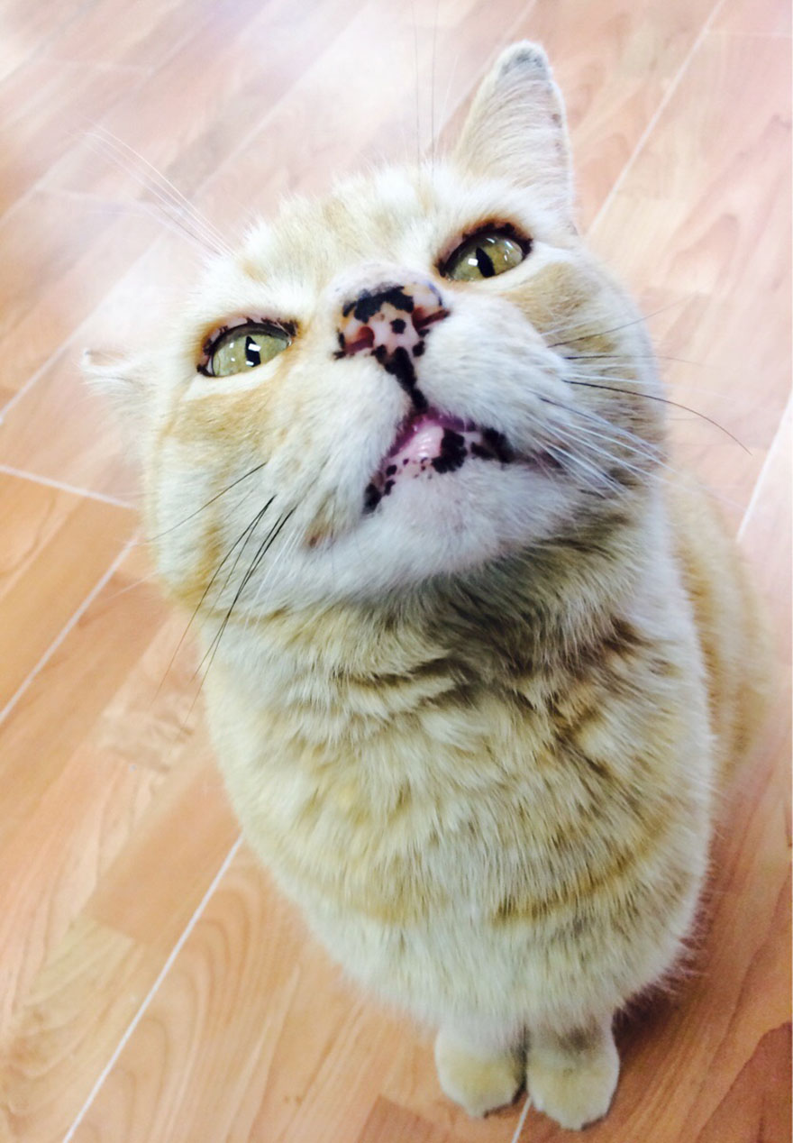 Zblízka kočičí galerie