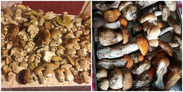 Velké houby hlava houby