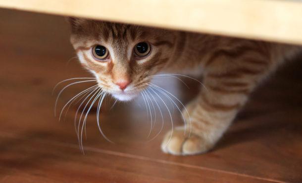 nová kočička galerie chlupatý kretén dospívající