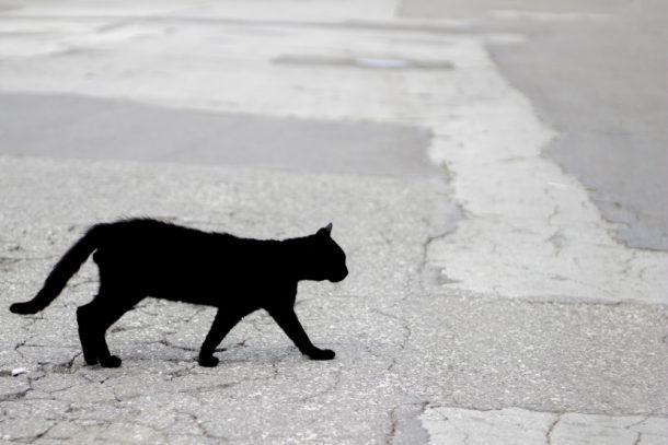 Fotografie černých koček