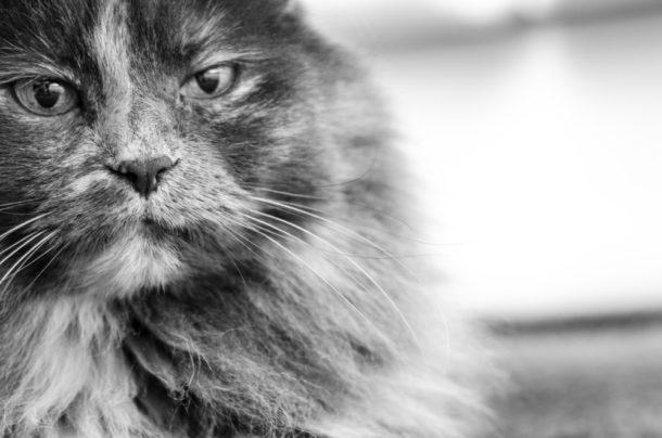 Blabk kočička