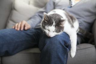 Černobílá kočka leží uvolněně a láskyplně na koleni mladého muže.