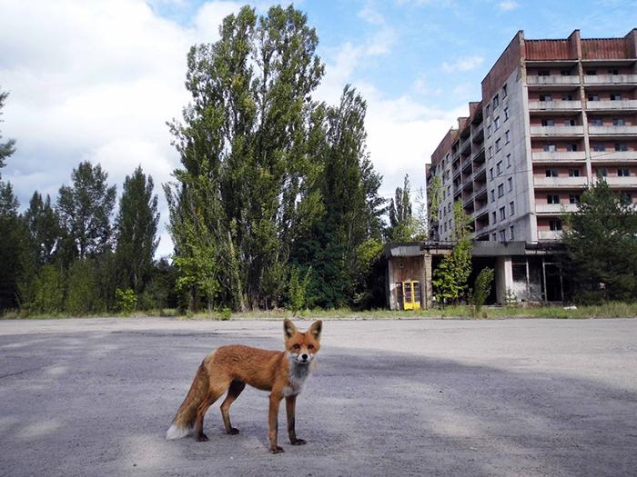 Pripyat Matka