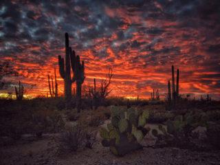 Joseph Cyr From Tucson Az, United States