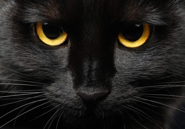 kočička černé ženy