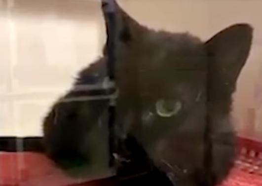 Toho napadlo, jak by všecko vypadalo jinak, kdyby se narodil třebas jako kočička.