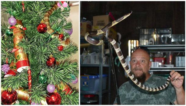 Had na vánočním stromku