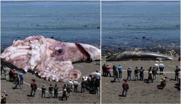 Fotomontáž mořské příšery