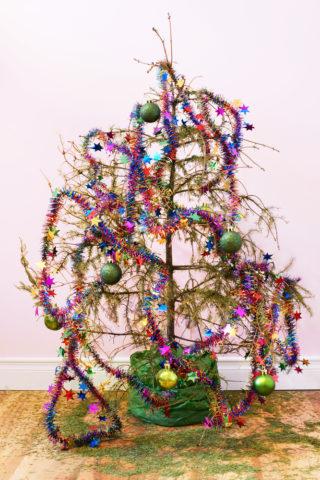 strom-jehlici-2