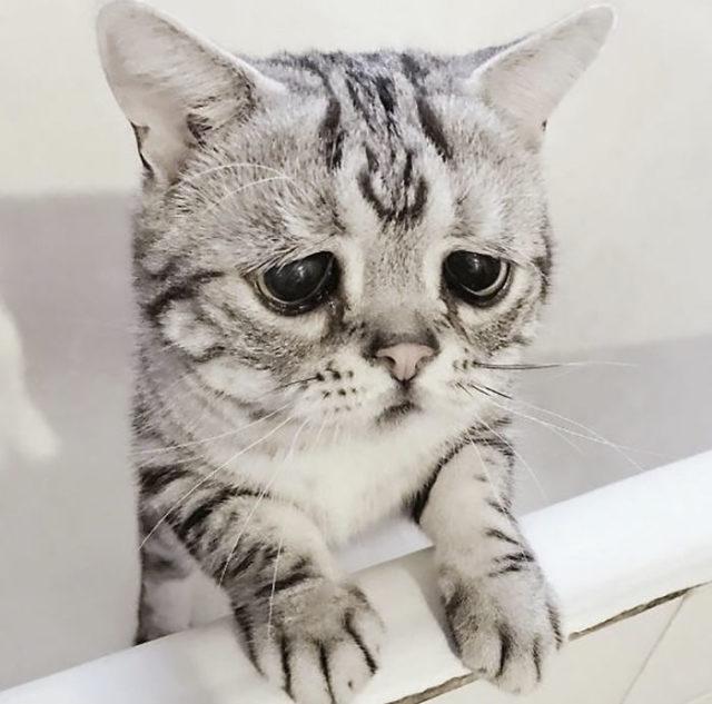 kočička šíří galerii velký zadek twerks na péro
