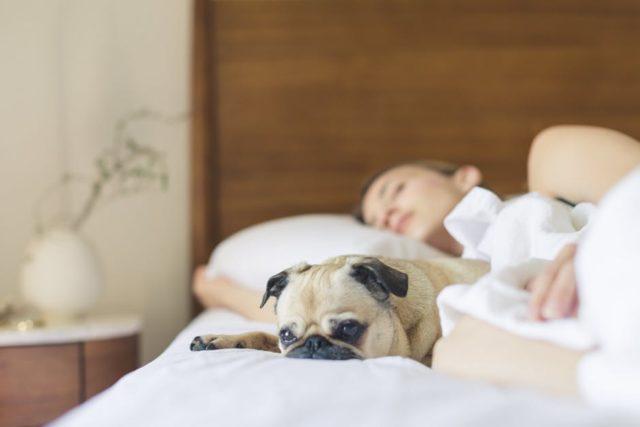 Image result for pes v posteli