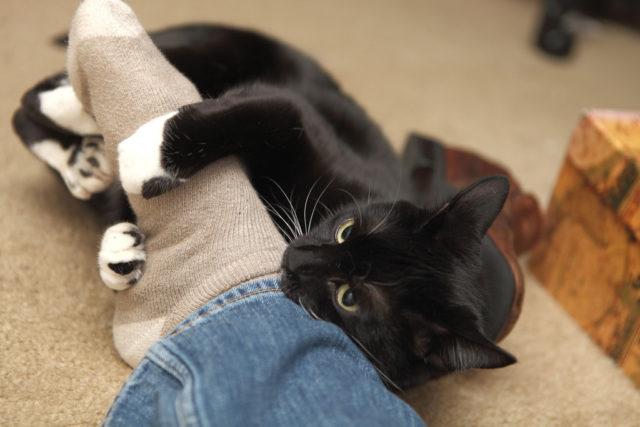 Mladá blacl kočička