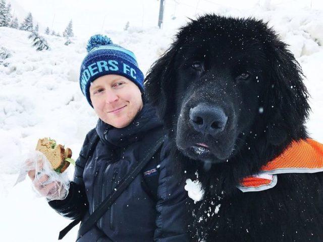 novofundlandský pes