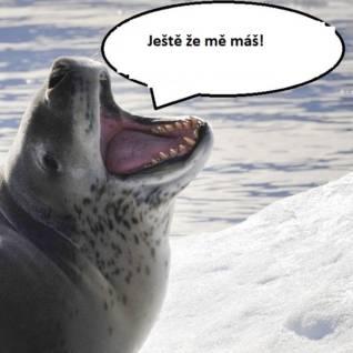 Sexuální poradna pana tuleně