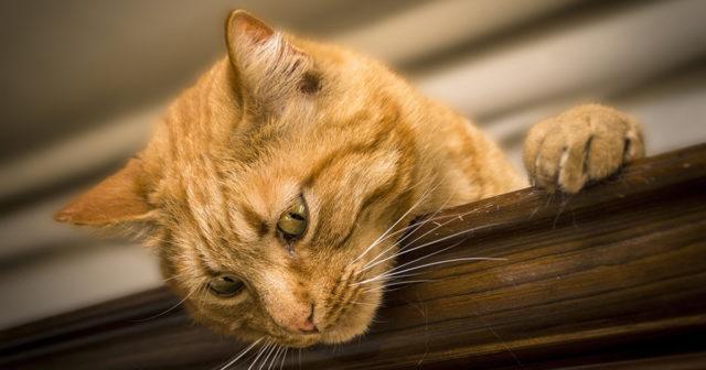 obrázky o tom, jak jíst kočička zdarma plné hd por