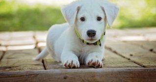 Jste opravdu rozhodnutí, že si pořídíte štěně?