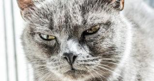 těsné kočičky klipy