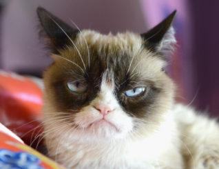 Zemřela slavná Grumpy Cat!