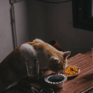 Jídlo pro lidi kočkám moc neprospívá