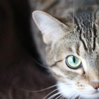 Kočky potřebují vyváženou stravu