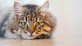Naučit kotě chodit na kočičí záchod není těžké