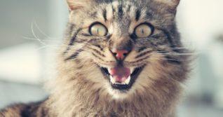Řeč těla vzteklé kočky poznáte velmi snadno...