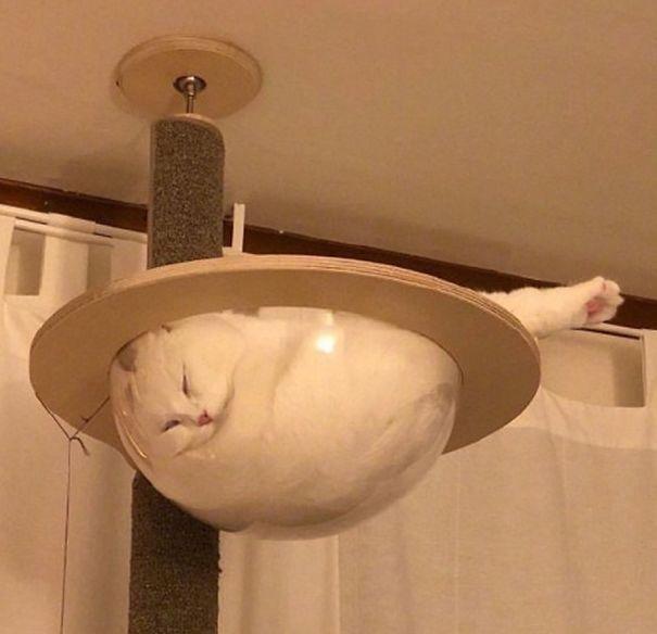 A z kočky se stala smetana...
