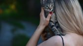 Dávejte své kočce pravidelně pamlsky