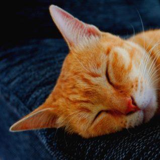 Dokážete rozpoznat, kdy se vaše kočka cítí dobře?