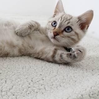 Kočky mohou trpět alergií