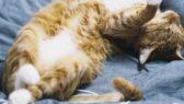 Pokud vám vaše kočka ukáže bříško, důvěřuje vám