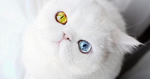 Zpívající koťata90 × Smutná kočička - Zpívající koťata74 × Kočka a ne pes!